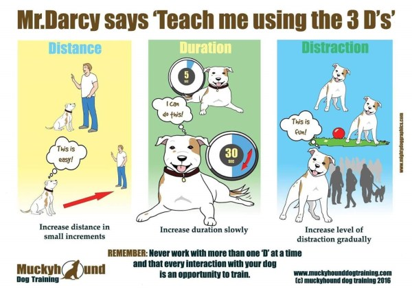 The 3 D's of Dog Training